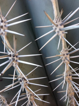 Prickles at the YSL Jardin Majorelle in Marrakech