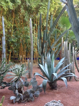 Yves Saint Laurent sure did like his cacti